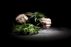 weed-marijuana-thinkstock*600xx2117-1410-0-0